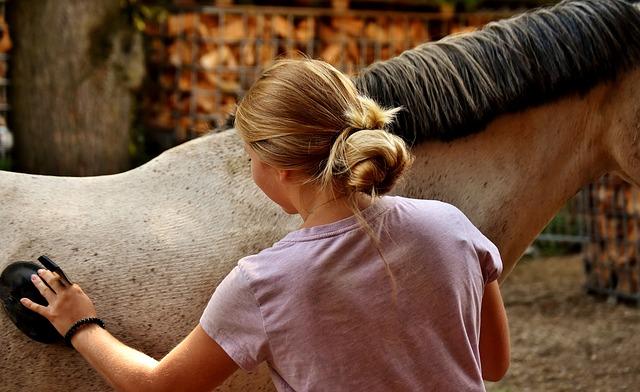 kartáč na koně